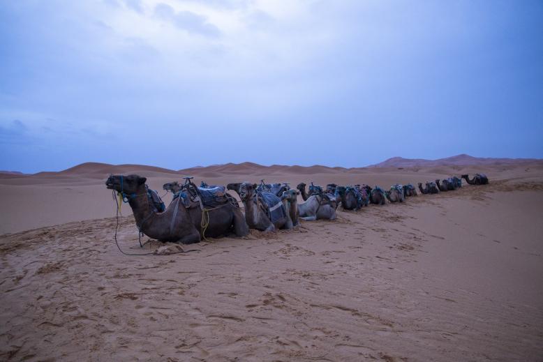 desert trip merzouga